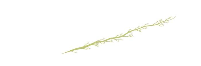 plancton_arbre de vie_3_GD