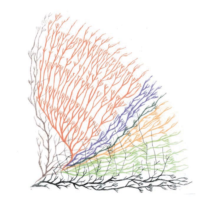 plancton_arbre de vie_5_GD