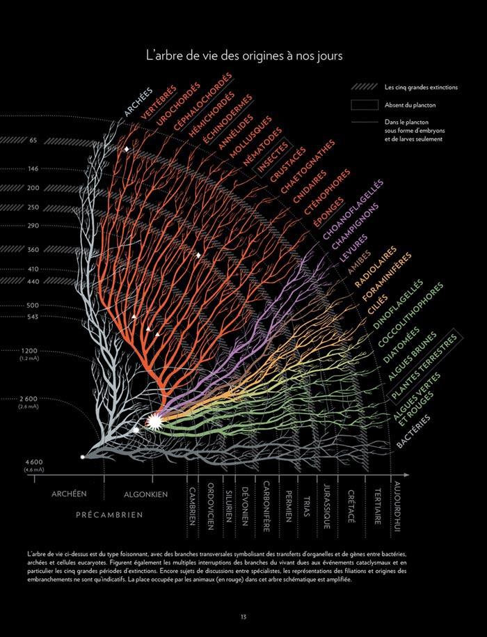 plancton_arbre de vie_7_GD