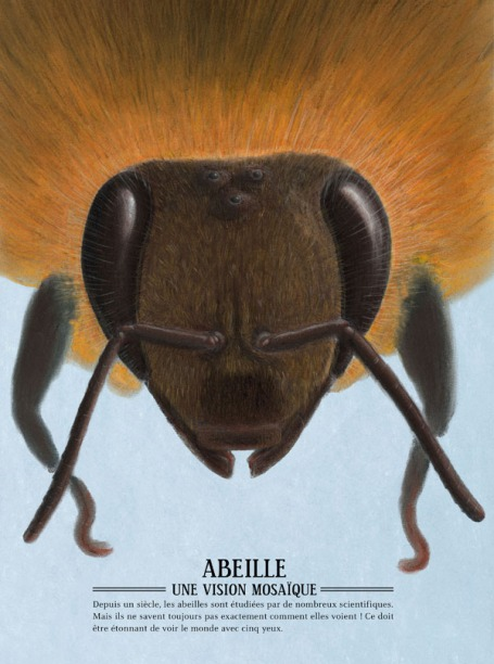 zooptique abeille1