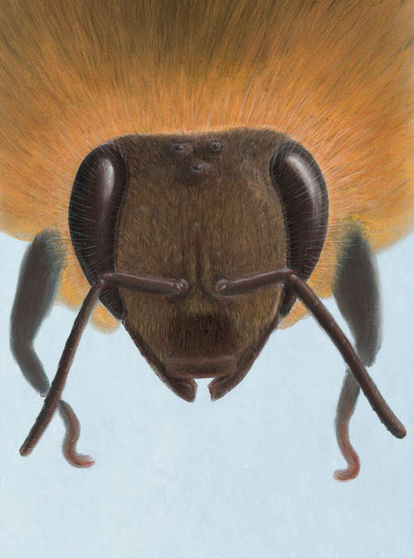 zooptique abeille0