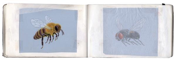 zooptique_carnet abeille mouche2